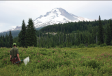 Searching for pollinators near Mt. Hood. Photo credit: Margo Conner Xerces Society