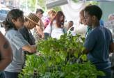 Photo credit: South Bronx Farmers Market