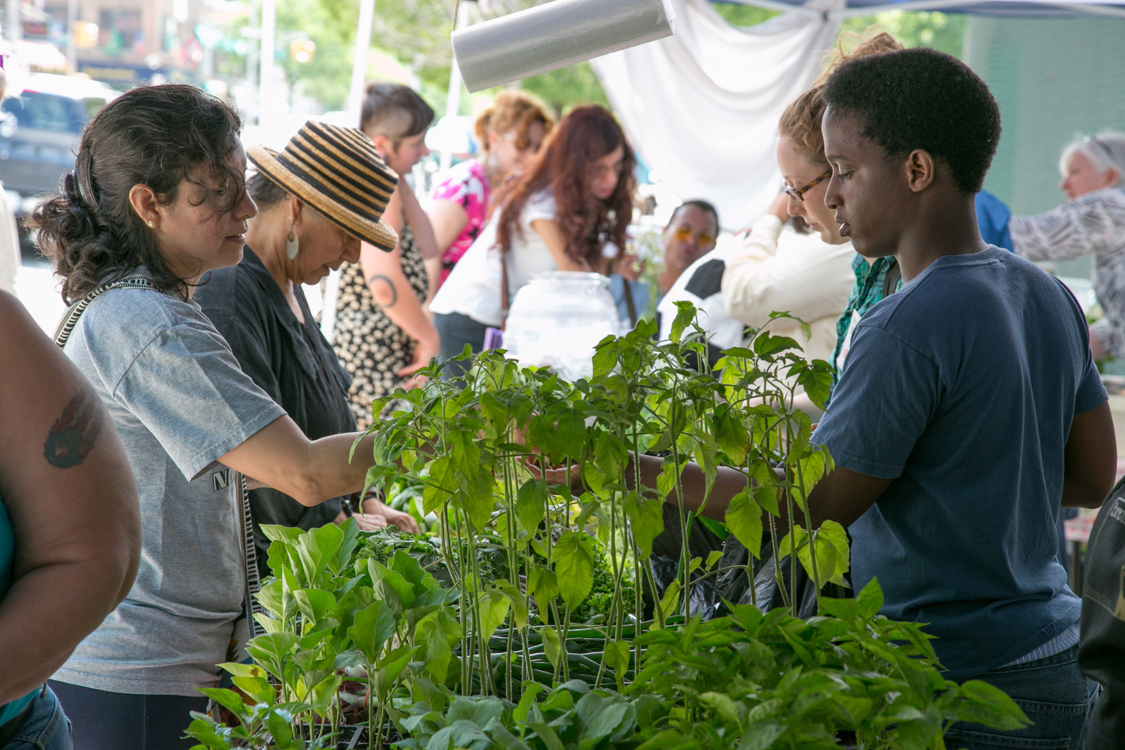 Photo credit: South Bronx Farmers Market