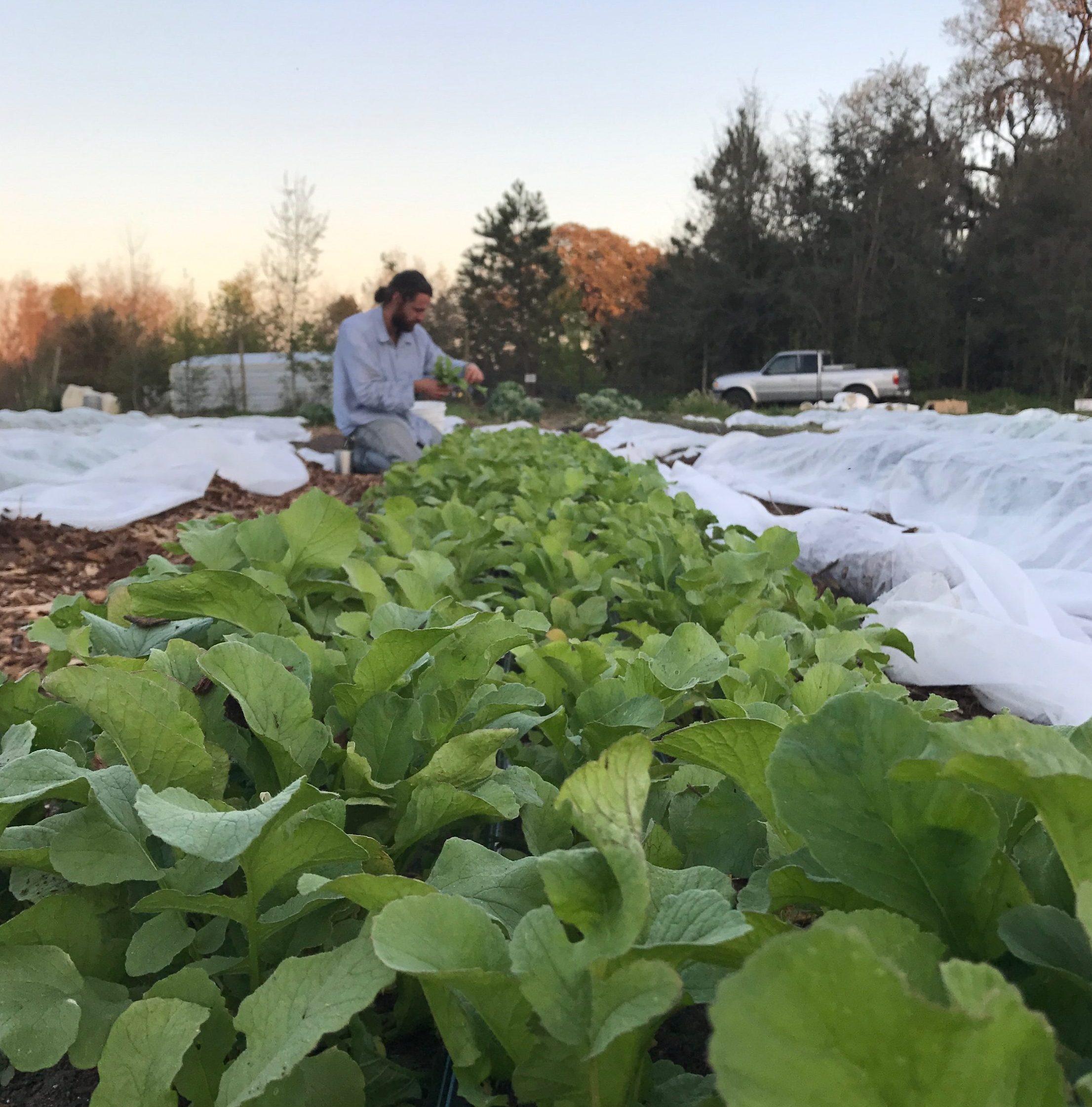 Farmers Market Connections Support Georgia Farmer During Hurricane